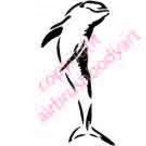 0428 dolphin