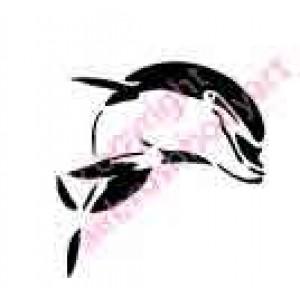 0431 dolphin